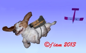 basset jump 2011 600